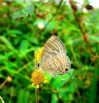 Butterfly, Insect, Nature, Summer, Wing, Garden