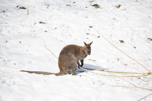 Snow, Winter, Cold, Nature, Animal World, Mammal