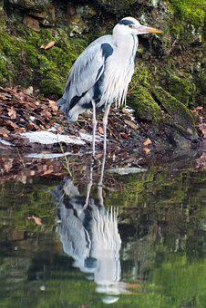 Bird, Heron, Waters, Animal World, Nature, Zoo, Lake