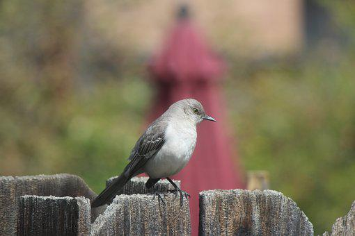 Nature, Outdoors, Bird, Wildlife, Backyard, Fence