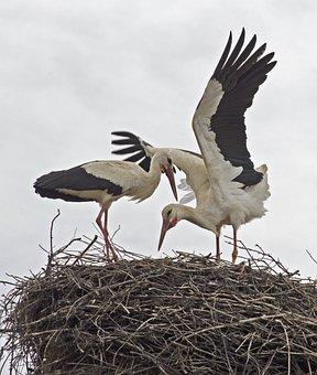 Storks, Bulgaria, Birds, Migratory Birds, Balkans, Nest