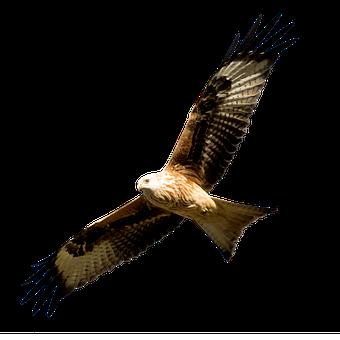Spain, Madrid, Manzanares, Milano Real, Bird, Predator