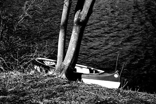 Nature, Waters, Wood, Black And White Photography