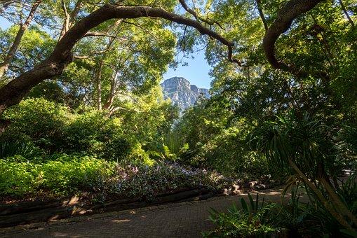 Kirstenbosch, Botanical Garden, Trees, Leaves, Flora