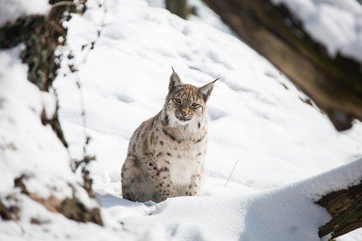 Snow, Winter, Cold, Nature, Animal World, Animal, Cat