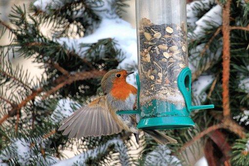 Robin, Winter, Snow, Food, Tree, Bird, Nature, Cold