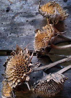 Nature, Dry, Wood, Flower