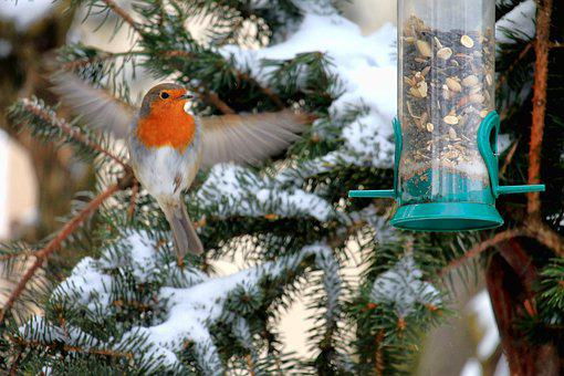 Robin, Winter, Snow, Food, Tree, Bird, Nature