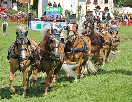 Cavalry, Human, Horse, Reiter, Tableware, Competition