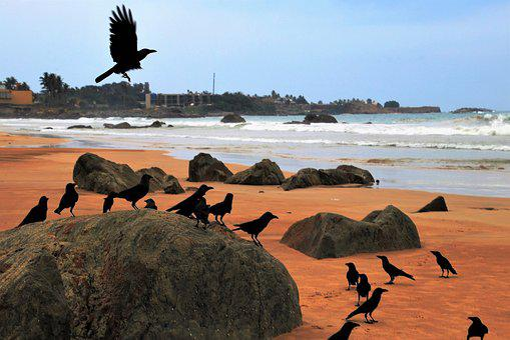 Raven, Wind, Birds, In Flight, Beach, Sand, Rock, Water