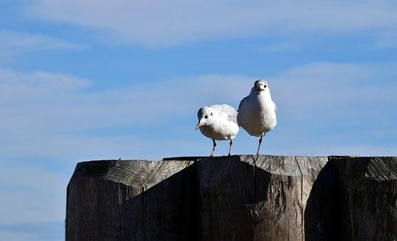 Bird, Nature, Sky, Waters, Gulls, Web, Wait, Blue