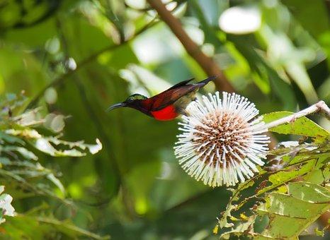 Nature, Tree, Flora, Leaf, Outdoors, Flower, Wildlife