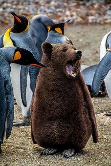 Animal, Mammal, Nature, Animal World, Penguin