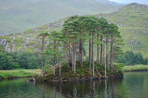 Water, Nature, River, Lake, Tree, Dumbledore, Island