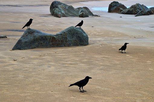 Raven, Birds, The Stones, Beach, Wind, Water, Sand