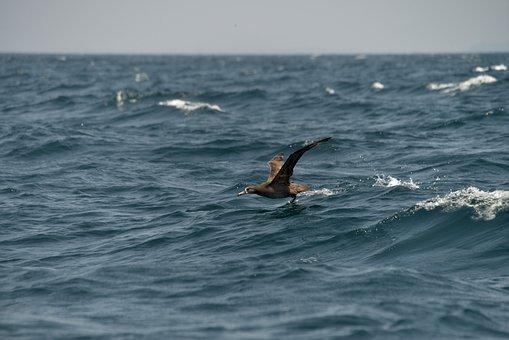 Sea, Waters, Ocean, Natural, Bird
