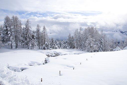 Snow, Winter, Cold, Frost, Frozen, Nature, Tree, Season