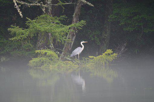 Waters, Natural, Wood, Bird, Pond, Rabbit, Gray Heron