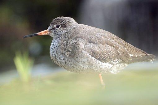 Nature, Bird, Animal World, Animal, Wing, Zoo, Hidden