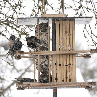 Stare, Feeding, Aviary