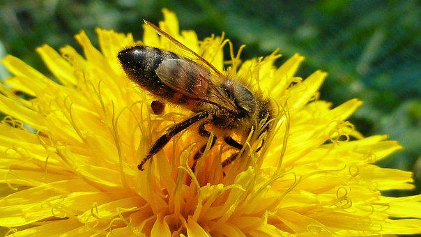 Nature, Flower, Insect, Bee, Summer, Pollination
