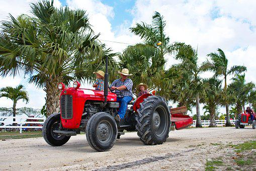 Tractor, Massey Ferguson, Agriculture, Farming, Country