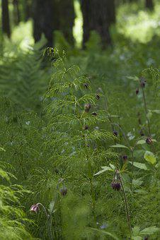 Nature, Leaf, Flora, Fern, Summer, Horsetail