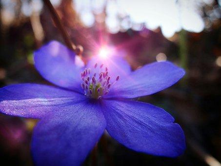 Flower, Nature, Plant, Petal