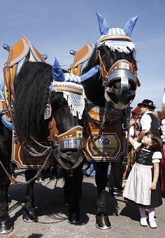Human, Costume, Parade, Man, Festival, Clothing, Horse