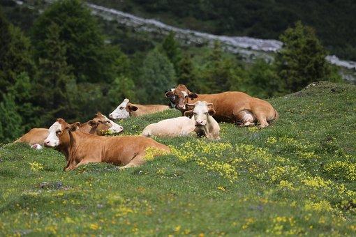 Grass, Meadow, Nature, Mammal, Animal, Animals, Graze