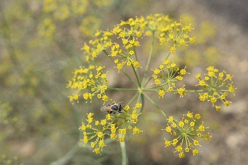Butterfly, Nature, Flora, Flower, Outdoors, Summer