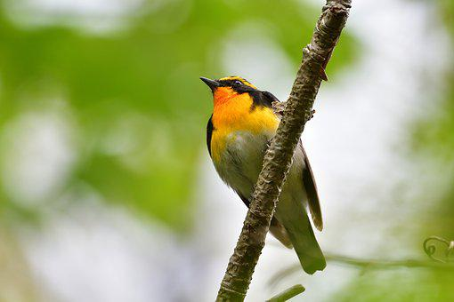Natural, Outdoors, Wild Animals, Bird, Millet Text
