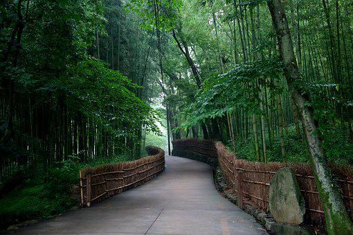Wood, Nature, Leaf, Path, Scenery, Summer, Road