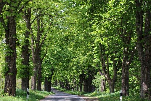 Avenue, Landscape, Tree Lined Avenue, Road, Brandenburg