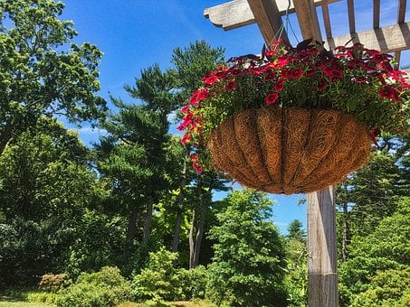 Hanging Plant, Garden, Summer, Trees