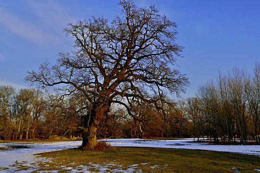 Tree, Nature, Country, The Sky, Old, The Most, Oak