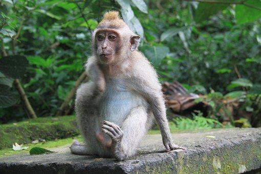 Nature, Monkey, Jungle, Animals, Living Nature, Tree