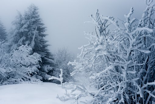 Snow, Winter, Frost, Cold, Frozen, Ice, Weather, Tree
