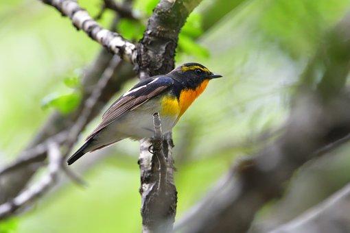 Bird, Natural, Wild Animals, Outdoors, Millet Text