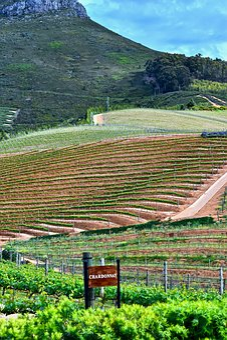 Delaire Vineyard, Agriculture, Vine, Winemaking, Farm