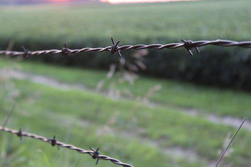 Barbed Wire, Fence, Wire, Outdoors, Nature, Agriculture