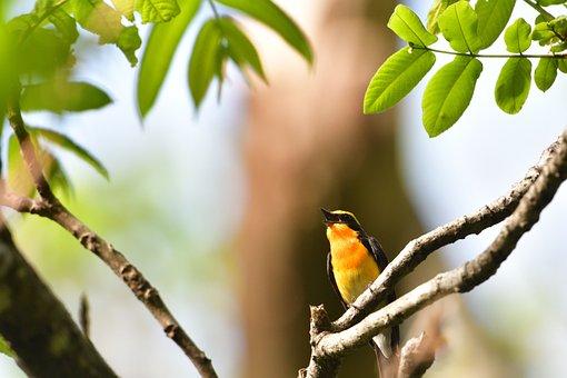 Natural, Leaf, Wood, Outdoors, Wild Animals, Bird