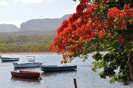 Nature, Body Of Water, Tree, Boats, Flamboyant, Sea