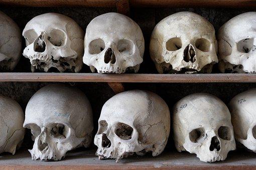 Skull, Frame, Bone, Cranium, Anatomy, Ossuary