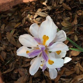 Flower, Flora, Nature, White Flower, Full Bloom