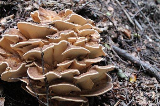Nature, Fungus