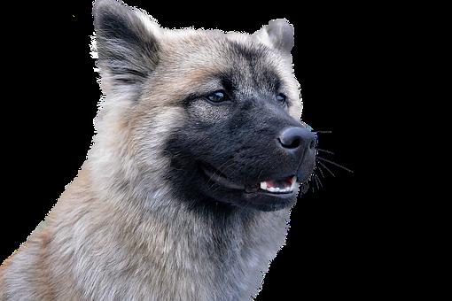 Dog, Isolated, Animal, Hundeportrait, Animal Portrait