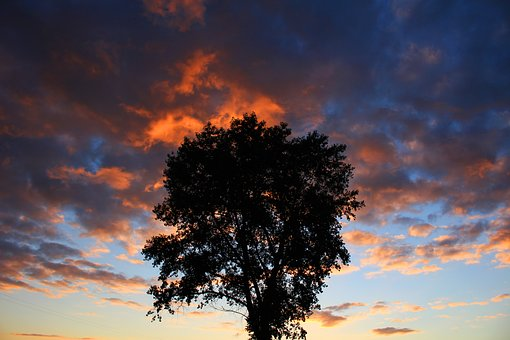 Wood, Sky, Sunset, Region, Lonely, Mood, Cloudy Sky