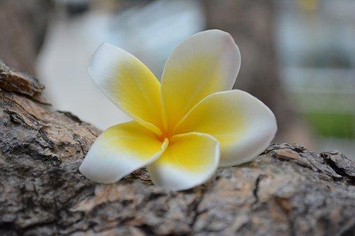 Flower, Thailand, Nature, A Yellow Flower, Natural