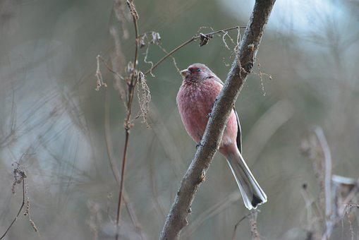 Natural, Wild Animals, Bird, Winter, Outdoors